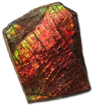 "Ammolite - Unprocessed sample of ammolite; a ""dragon skin"" pattern is apparent"