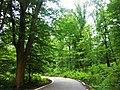 Amol Forest Park.jpg