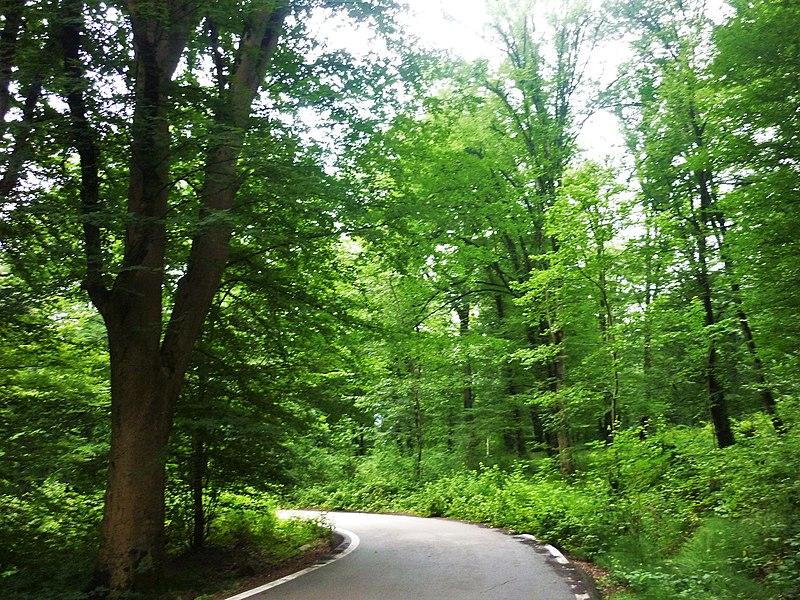 File:Amol Forest Park.jpg