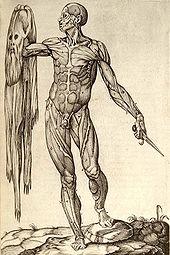 History of anatomy  Wikipedia