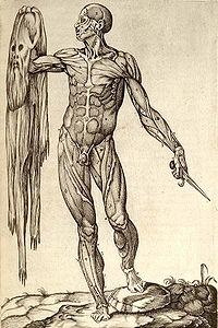 Anatomía del cuerpo humano, según Juan Valverde de Amusco, el sujeto aparece desollado sosteniendo en su mano su propia piel