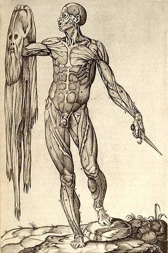 History of anatomy - Muscular figure in allegorical pose by Juan Valverde de Amusco, 1559