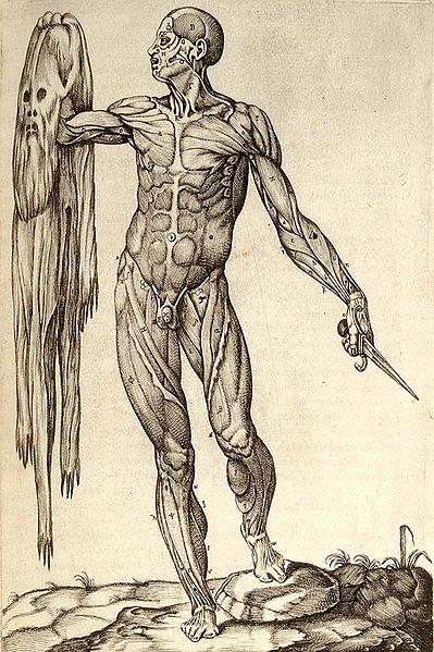 anatomía salud y estimulacion temprana