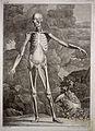 Anatomy Wellcome L0021858.jpg