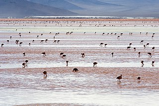Laguna Colorada shallow salt lake in the southwest of the altiplano of Bolivia