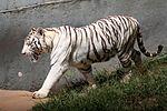 Animais do Zoo passam por exames periódicos (33895076295).jpg