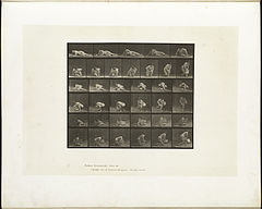 Animal locomotion. Plate 270 (Boston Public Library).jpg