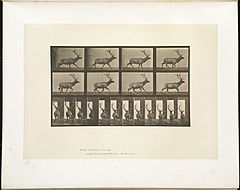 Animal locomotion. Plate 694 (Boston Public Library).jpg