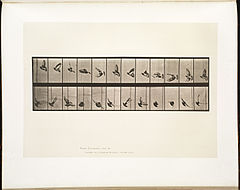 Animal locomotion. Plate 756 (Boston Public Library).jpg