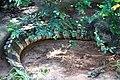 Animals in Thailand Photographs by Peak Hora (10).jpg