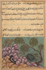 Page from Tales of a Parrot (Tuti-nama): Twenty-sixth night: The dethroned frog Shapur seeks the help of the serpent