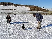 Antarctica-Climate-AntarcticaSummer