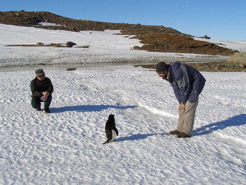 AntarcticaSummer.jpg