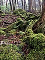 Aokigahara Suicide Forest Japan.jpg