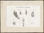 Ara ararauna - anatomie - 1805-1811 - Print - Iconographia Zoologica - Special Collections University of Amsterdam - UBA01 IZ18500095.tif