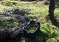 Archangelos Αρχάγγελος Rhodes Ρόδος 2019-11-27 08 olive harvest.jpg