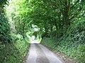 Arching trees along the Llangeinwen road - geograph.org.uk - 850186.jpg