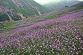 Asalem Khalkhal road - panoramio (3).jpg