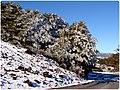 Ascenso al Volcan Osorno (4708566506).jpg