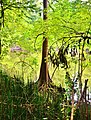 Atchafalaya National Wildlife Refuge - panoramio.jpg