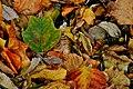 Autumn (15455138677).jpg