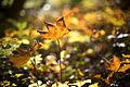 Autumn Lights (8196497622).jpg