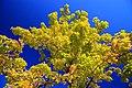 Autumn colours near the Othello tunnels (15496371093).jpg