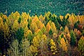 Autumn forest - Flickr - Stiller Beobachter.jpg