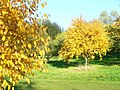 Autumn in Jubilee Arboretum - geograph.org.uk - 1003276.jpg