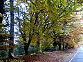 Autumn on the Black Isle. - geograph.org.uk - 1552004.jpg
