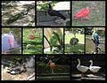 Aves Zoologico de Caricuao Caracas - Venezuela.jpg