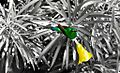 BIRDS GAMBIA-9776 (6843601160).jpg