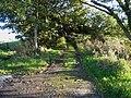 Back lane to Penkill in the Girvan valley - geograph.org.uk - 262946.jpg