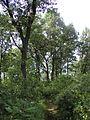 Back trail P7300002.JPG