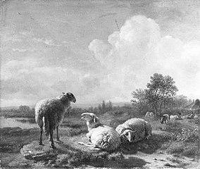 Grazende en rustende schapen in een vlak landschap