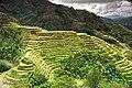 Banaue Rice Terraces pic by J. Nicdao - Flickr.jpg