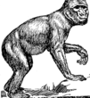 Barbary Ape (PSF).png