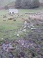 Barn and Bog - geograph.org.uk - 1030204.jpg