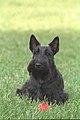 Barney P2964-04.jpg