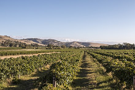 A vineyard in the Barossa Valley, one of Australia's major wine-producing regions. The Australian wine industry is the world's fourth largest exporter of wine. Barossa Valley 10.jpg