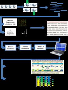 Bayesian tool for methylation analysis  Wikipedia