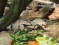 Bdg zoo terrarium 16 01-2015.jpg