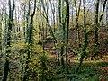 Beech wood near Taddiport - geograph.org.uk - 1590039.jpg