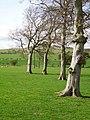 Beeches, Legar - geograph.org.uk - 159536.jpg
