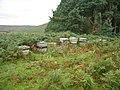 Beehives near Harehope Farm - geograph.org.uk - 1498777.jpg