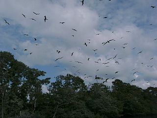 Bird Island (Belize) island in Belize