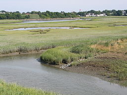 BelleIsleMarsh1Alc.JPG