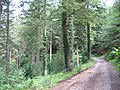 Bend on Forestry road - geograph.org.uk - 488006.jpg