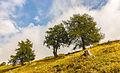 Bergtocht van Vens naar Bettex in Valle d'Aosta (Italië) 016.jpg