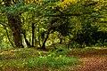 Beverley Westwood IMG 7805 - panoramio.jpg